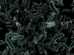 Infectious Bacteria Image