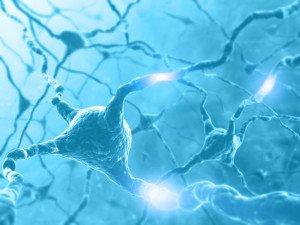 transplanting neurons